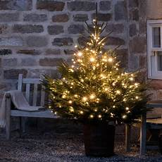 Professional Christmas Tree Lights 240 Christmas Tree Lights By Lights4fun