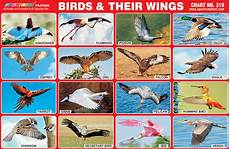 Bird Wingspan Chart Spectrum Educational Charts Chart 319 Birds Amp Their Wings