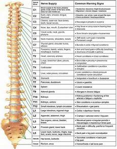 Spinal Levels Chart Good Info Health Pinterest Spinal Nerve