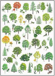 Tree Leaves Chart Tree Identification Cornell Edu Pdf A Detailed Guide But