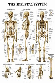 Full Body Anatomy Chart Best Rated In Science Education Charts Amp Posters Amp Helpful