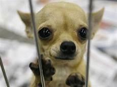 lille hund levende hund fundet i bagage bt utroligt sandt www