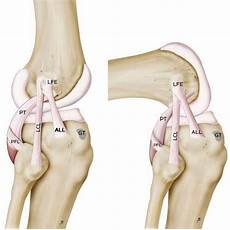 Knees Ligaments And Tendons Knee Ligaments 1024x1024 Jpg