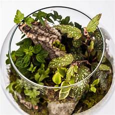 Best Plants For Low Light Terrarium Choosing The Best Plants For Your Terrarium Quiet Corner