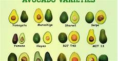 Different Types Of Avocado Garden And Farms Different Avocado Varieties