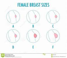 Different Breast Sizes Chart Set Of Round Line Icons Of Different Female Breast Size