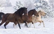 ausmalbilder pferde im schnee kostenlose malvorlagen ideen