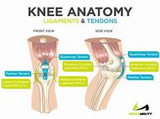 Knees Ligaments And Tendons Inner Knee Why Does The Inside Of My Knee Hurt