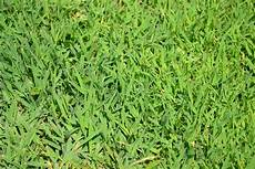 Control Crab Grass Crabgrass Is A Grassy Weed That Emerges From Seed