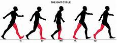 Gait Cycle Self Organization An Example Adam Young Golf