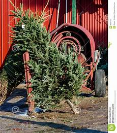 How To Wrap A Large Tree With Christmas Lights Christmas Tree And Tree Wrapping Machine Stock Image