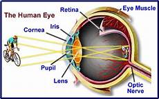 How Light Enters The Eye The Order Of Which Light Passes Through The Eye Pupil Is