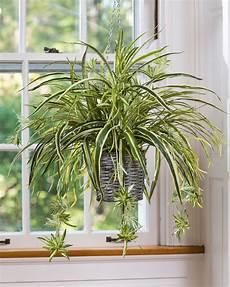 Low Light Pet Safe Indoor Plants 15 Best Low Light Indoor Plants Garden Best Indoor