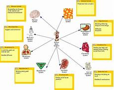 11 Body Systems Teaching Human Body Systems To First Graders New