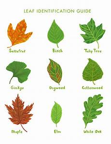 Tree Leaves Chart Leaf Identification Guide For Adventure In The Rookie