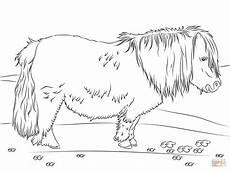 shetland pony coloring page free printable coloring