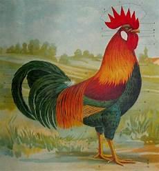 versi di animali da cortile razas italianas de pollos otros razas italianas de pollos
