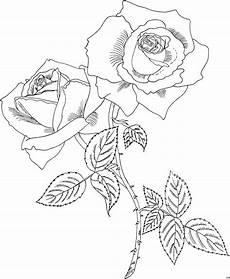Gratis Malvorlagen Prophytarose Ausmalbild Malvorlage Blumen