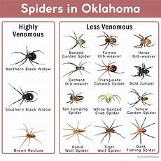 Oklahoma Spiders Identification Chart Types Of Poisonous And Non Poisonous Spiders In Oklahoma