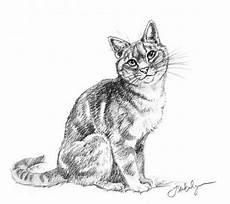 Cat Drawing Images Review How To Draw Cats And Kittens A Complete Guide For
