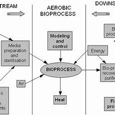 Bioprocess Flow Chart Chirvase Aurelia Ana Ph D National Institute For