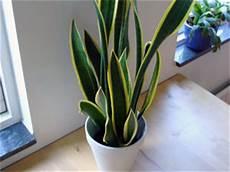Low Light Apartment Plants Apartment Garden Top 5 Low Light Plants Boldsky Com