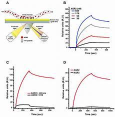 Surface Plasmon Resonance Surface Plasmon Resonance Spr Analysis Of H10 Agr2