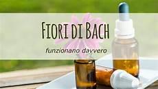 fiori di bach farmacia fiori di bach funzionano davvero