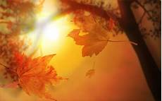Autumn Powerpoint Background Autumn Leaves With Sunlight Free Ppt Backgrounds For Your