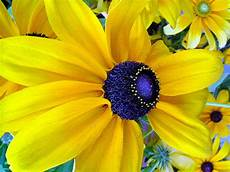 Yellow Flower Wallpaper by Yellow Flower Wallpapers Yellow Flower Stock Photos