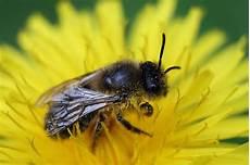 Pollinator Plan Obama Commits To Saving Declining Honey