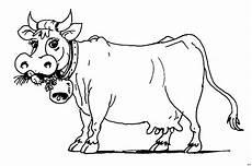 Malvorlage Lustige Kuh Ausmalbild Kuh Kostenlos Bild