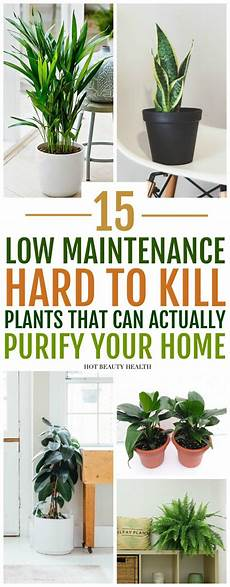 Low Light Pet Safe Indoor Plants 15 Air Purifying Plants You Need In Your Home Low