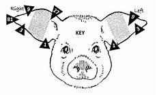 Ear Notch Pig Nmsu Identify Pigs By Ear Notching