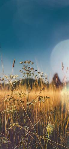 Iphone Wallpaper Field Nature by Iphonexpapers Apple Iphone Wallpaper Mx04 Fall Field