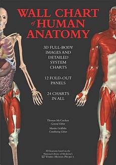 Full Body Anatomy Chart Wall Chart Of Human Anatomy 3d Full Body Images And