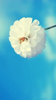 Free Flower Wallpaper Phone Hd by Flower Iphone 5 Wallpaper Hd Free
