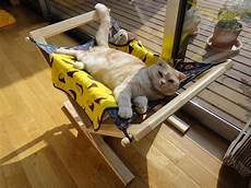 how to keep cats cool healthy paws pet insurance