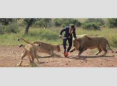 Man Plays Soccer With Lions While Wearing A Suit, And It's