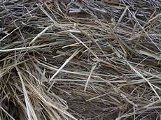 Fescue Hay White House Farms Special Cow Hay Orchard Fescue 4x5 Bales