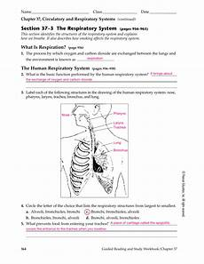 Respiratory Disease Fact Chart Answer Key Section 37 3 The Respiratory System Pages 956 963 Db