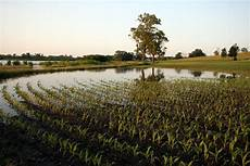 Crop Pricing Weather Slows Us Feed Crop Harvest Not Expected To