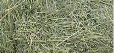 Fescue Hay Nutrition Lab Feed Stuff Animal Sciences 110 With