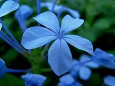 flower wallpaper 31 jpg blue flowers june 31 widescreen wallpaper