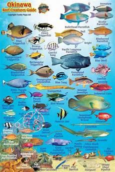 Reef Fish Identification Chart Franko Okinawa Reef Creatures Guide Waterproof Fish