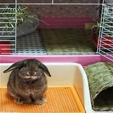 accessori per gabbie conigli prodotti coniglio accessori e mangimi per conigli