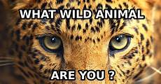 If You Could Be An Animal What Would You Be What Kind Of Wild Animal Are You Quiz Quizony Com