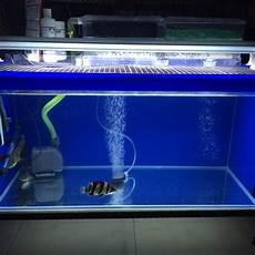3 Foot Fish Tank Light 3 Feet Fish Tank Full Set Pet Supplies On Carousell