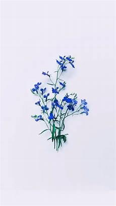 Minimalist Aesthetic Flower Wallpaper by Unsavory Aesthetic Backgrounds Flower Aesthetic Blue