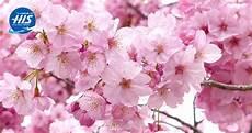 blumen malvorlagen jepang 5 fakta unik bunga yang wajib kamu ketahui